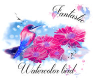 Fantastic water color bird. Design white background stock photography