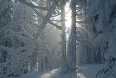 Fantastic Winter Forest Royalty Free Stock Photos