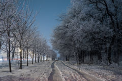 Fantastic winter forest royalty free stock photography