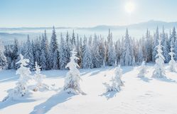 Fantastic winter landscape. Magic sunset in the mountains a frosty day. On the eve of the holiday. The dramatic scene Royalty Free Stock Image