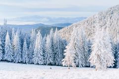 Fantastic winter landscape. Magic sunset in the mountains a frosty day. On the eve of the holiday. The dramatic scene Stock Images