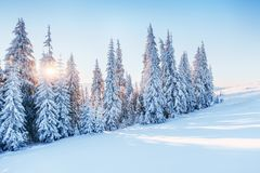 Fantastic winter landscape. Magic sunset in the mountains a frosty day. On the eve of the holiday. The dramatic scene Stock Image