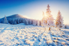 Fantastic winter landscape in the mountains of Ukraine. In antic Stock Image