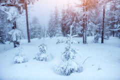 Fantastic winter landscape in the mountains of Ukraine. Stock Images