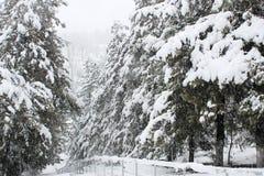 Fantastic winter landscape. Royalty Free Stock Image