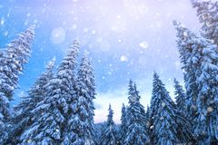 Fantastic winter landscape royalty free stock photos