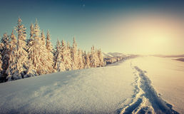 Fantastic winter landscape and trampled paths at sunset that lea Royalty Free Stock Photos