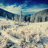 Fantastic winter landscape and tree in hoarfrost. Royalty Free Stock Photo