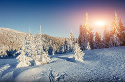Fantastic winter landscape and worn trail leading into the mount Stock Photography