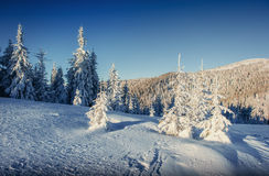 Fantastic winter landscape and worn trail leading into the mount Stock Images