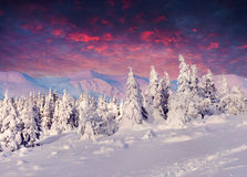 Fantastic winter lanscape in mountains Royalty Free Stock Images