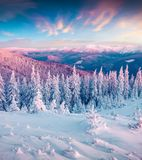 Fantastic winter sunrise in Carpathian mountains with snow cower. Ed trees. Colorful outdoor scene, Happy New Year celebration concept. Artistic style post Royalty Free Stock Image