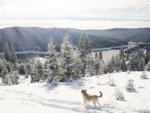 Fantastic Winter wonderland with dog in the snow Stock Image