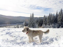Fantastic Winter wonderland with dog in the snow Royalty Free Stock Images