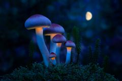 Fantastic world of mushrooms. Glowing mushrooms in the night for. Est. Night landscape royalty free stock photo
