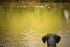 Fantastica circa Duckies fotografie stock libere da diritti