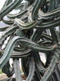 Fantastical cactus Royalty Free Stock Image