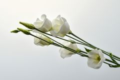 Bouquet of withe flowers. Fantastically Bouquet of withe flowers Stock Photography