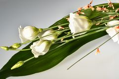 Bouquet of withe flowers. Fantastically Bouquet of withe flowers Stock Photo