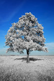 Fantastically unreal white tree on blue sky background Royalty Free Stock Photos