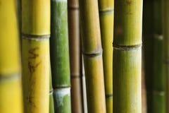 Fantastisch bamboebos royalty-vrije stock fotografie