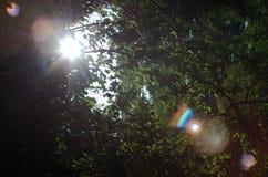 Fantastisch licht Stock Afbeelding