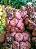 Fantastisch rood fruit Stock Fotografie