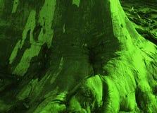 Fantastisch schöner Stamm eines Eukalyptus in der grünen Farbe stockfotos