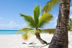 Fantastisch tropisch strand royalty-vrije stock afbeeldingen