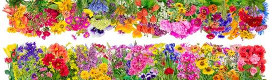 Fantastische bloemengrenzen Stock Fotografie