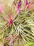 Fantastische Blumen Lizenzfreie Stockbilder