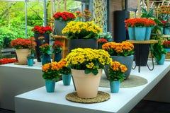 Fantastische Blumenausstellung in Keukenhof-Park, die Niederlande, Europa Stockfoto