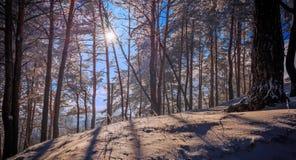 Fantastische de winterzonsondergang Stock Foto