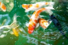 Fantastische Fische der Unschärfe im Wasser Stockbild