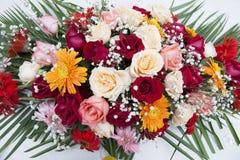Fantastische Gänseblümchen-und Rosen-Bildschirmanzeige Stockfotografie