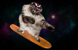 Fantastische het met een skateboard rijden kat in ruimte Stock Fotografie