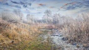 Fantastische ijzige lanscape in bos stock afbeelding