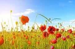 Fantastische Landschaft mit Mohnblumen auf dem Gebiet gegen den Himmel Lizenzfreie Stockfotos