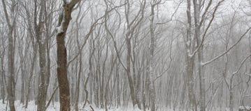 Fantastische Muster des Schnees deckten Bäume ab Lizenzfreie Stockfotos