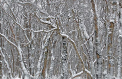 Fantastische Muster des Schnees deckten Bäume ab Lizenzfreies Stockbild