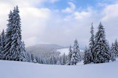 Fantastische pluizige Kerstbomen in de sneeuw Prentbriefkaar met lange bomen, blauwe hemel en sneeuwbank De winterlandschap in de Stock Foto