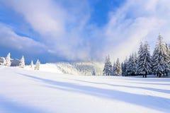 Fantastische pluizige Kerstbomen in de sneeuw Prentbriefkaar met lange bomen, blauwe hemel en sneeuwbank De winterlandschap in de Royalty-vrije Stock Foto