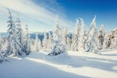 Fantastische Winterlandschaft in den Bergen von Ukraine Lizenzfreies Stockbild