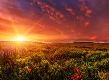 Fantastischer Abend mit blühenden Hügeln im warmen Sonnenlicht Lizenzfreies Stockbild