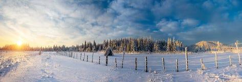 Fantastischer blauer Himmel und schneebedeckte Bäume Stockbild
