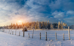 Fantastischer blauer Himmel und schneebedeckte Bäume Stockfotografie
