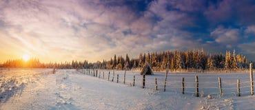 Fantastischer blauer Himmel und schneebedeckte Bäume Lizenzfreie Stockfotos