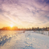 Fantastischer blauer Himmel und schneebedeckte Bäume Stockbilder