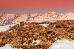 Fantastischer bunter Sonnenuntergang und Winter gestalten in den Bergen landschaftlich Lizenzfreie Stockfotografie