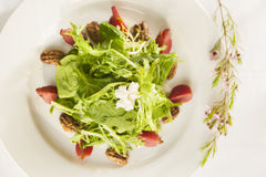 Fantastischer gesunder Salat auf einer weißen Platte. Stockfoto
